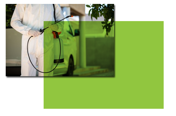 Affordable Pest Control Services