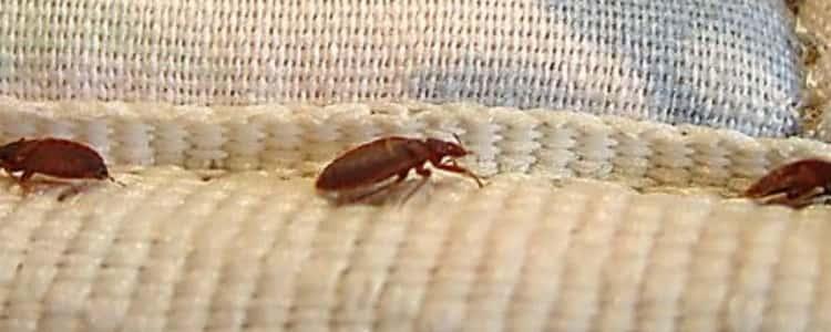 Bed Bug Control Holder