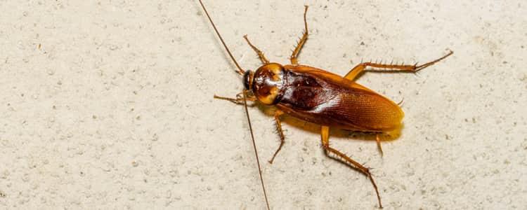 Cockroach Control Holder